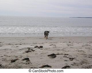 dog retrieving stick