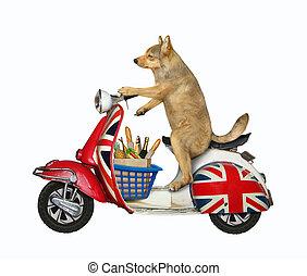 Dog riding english moped 3