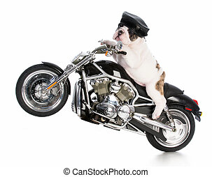 dog riding motorcycle