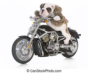 dog riding motorcycle