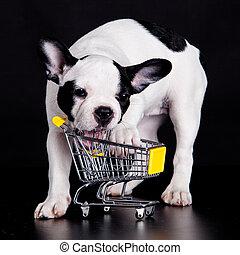 dog., rigolote, peu, bouledogue, supermarché, francais, jouer, cart.