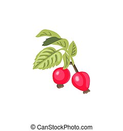Dog-rose branch with leaves and flowers. Wild rose. Rosa canina. Rose hip also known as rose haw or rose hep. Vector illustration.