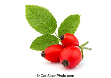 Dog Rose; wild rose; Rosa canina berries with leaf isolated.