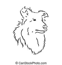 Dog Rough Collie isolated on White background. Vector illustration. collie, vector sketch on a white background