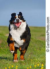 Dog run in field