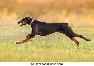 Dog run in park