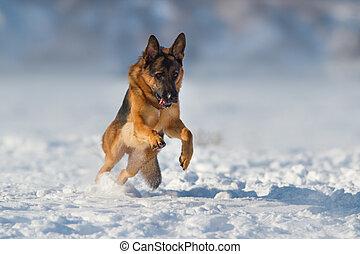 Dog run in snow