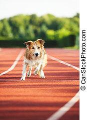 Dog running at sport stadium
