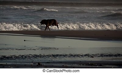 Dog running in the beach shore in slow-mo