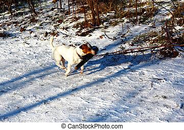 Dog running in winter.
