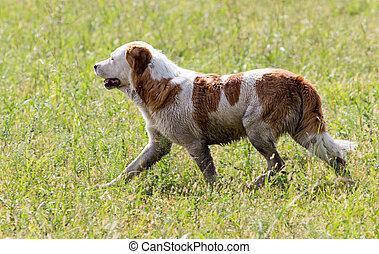 Dog running on grass outdoors