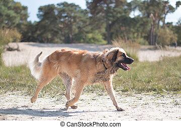 Dog running on sand
