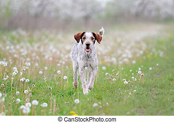 Dog running on the grass field