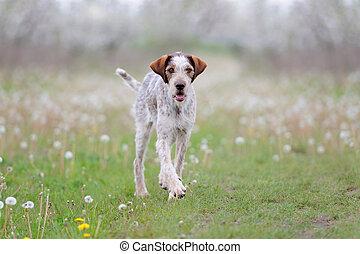 Dog running on the grass field