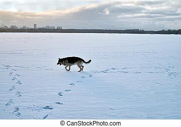 Dog Running Through Snow