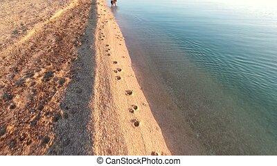 dog running towards camera in the sea