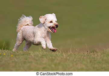 Dog running up a grassy hill
