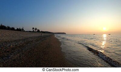 Dog runs along the beach