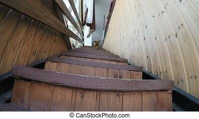 Dog runs down the stairs