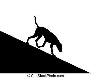 Dog runs downhill