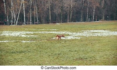 Dog runs in the autumn park, slow-motion shot