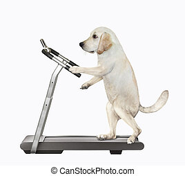 Dog runs on treadmill 3