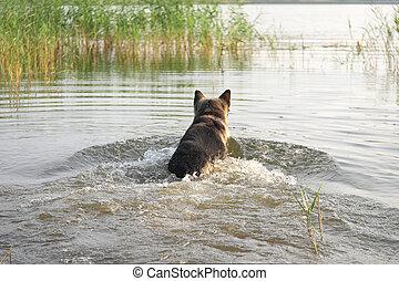 Dog Rushing In Water