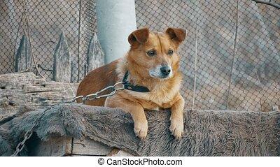 dog sad is sitting bored at the booth on circuit - dog sad...