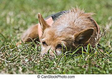 Dog Sad