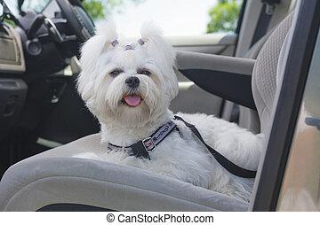 Dog safe in the car