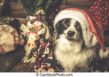 Dog Santa hat cards