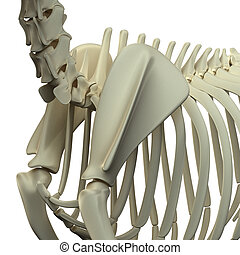 Dog Scapula Anatomy - Anatomy of a Canine Scapula
