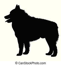 Dog Schipperke breed. Silhouette