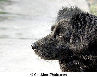 dog., schwarz
