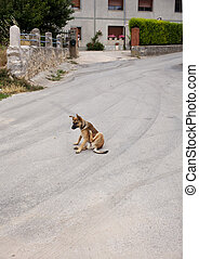 Dog scratching in the street