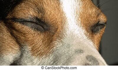 Dog screws up his eyes.