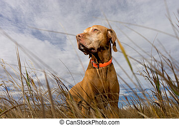 dog seen from ground level through grass