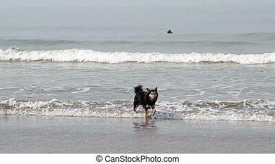 Dog shake off on the coast near sea