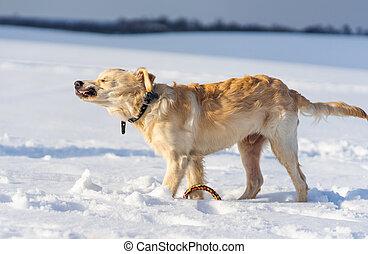 Dog shaking off snow