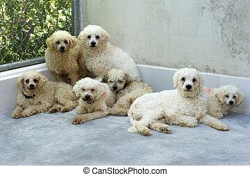 Dog Shelter - Dog shelter dogs are huddled together.