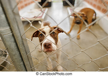 Dog Shelter - Dog shelter is an animal shelter with a sad...