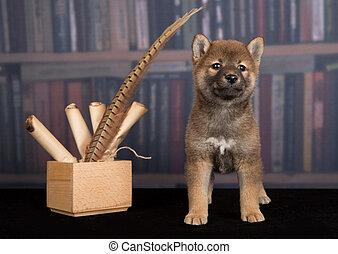 dog Shiba Inu reading books