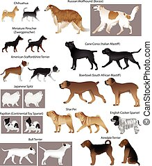 Dog show - Collection of different breeds of dogs