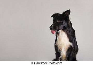 dog showing tongue