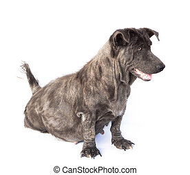 Dog sick leprosy skin problem with pregnant on white ...
