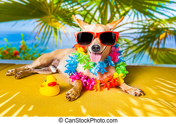 chihuahua dog under the shadow of a palm tree relaxing and resting