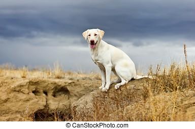 dog sit - dog grass stone sit