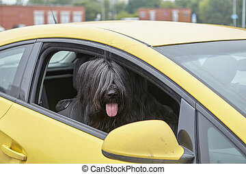 Dog sits inside car with head in opened window.
