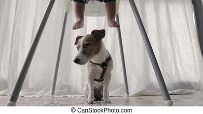 Dog sits under the highchair children's legs - Little boy...