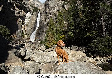 dog sitting at waterfall in yosemite